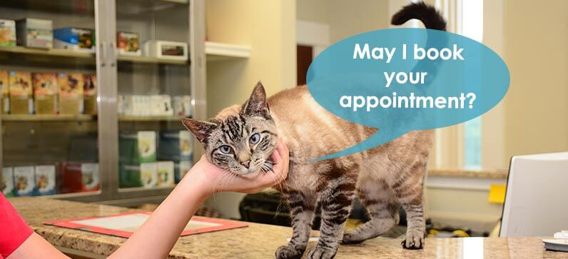 Appointments at Goose Creek Pet Hospital