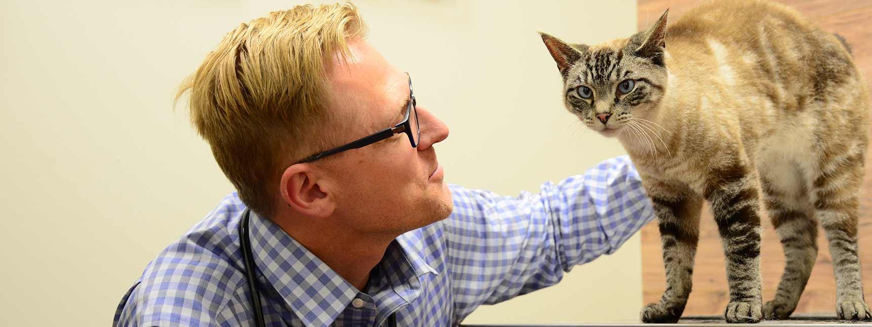 Veterinary care in Franklin TN