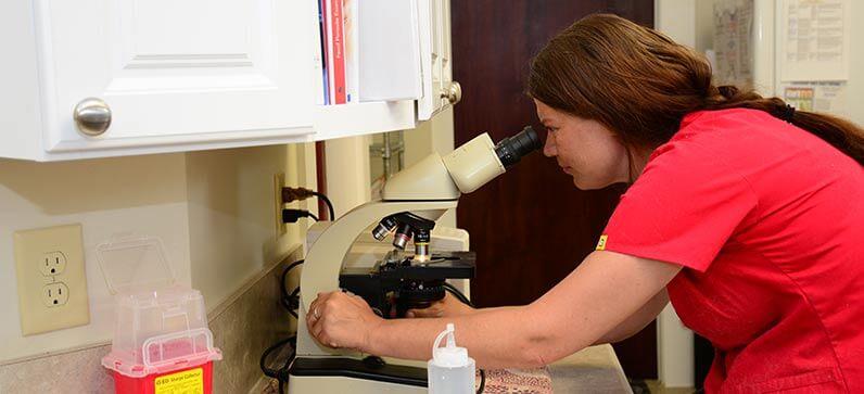 Veterinary therapy laser in Franklin TN